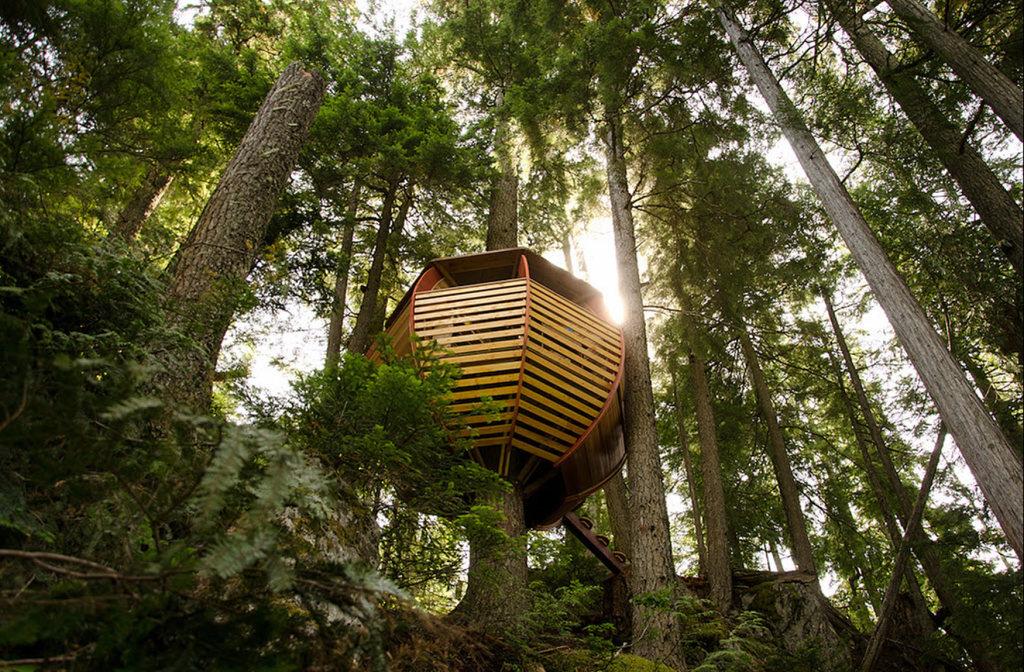 Cabane de jeux en robinier autour d 39 un arbre cabanade for Bordure autour d un arbre